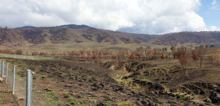 Holbrook Landcare to play key role in local bushfire recovery
